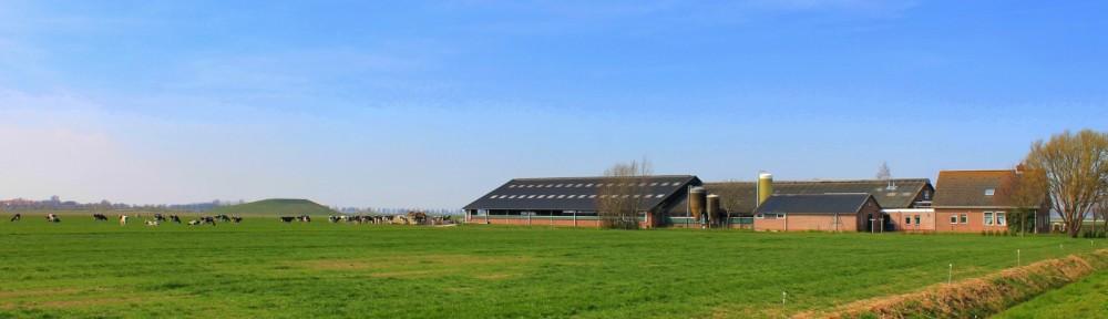 Kaasboerderij de Westplaat
